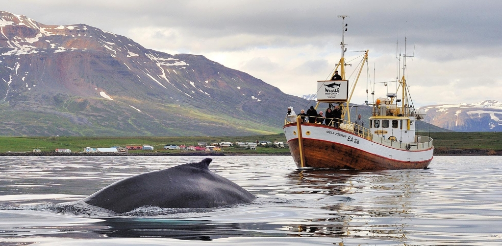 Whale Watching and Sea Angling Hauganes